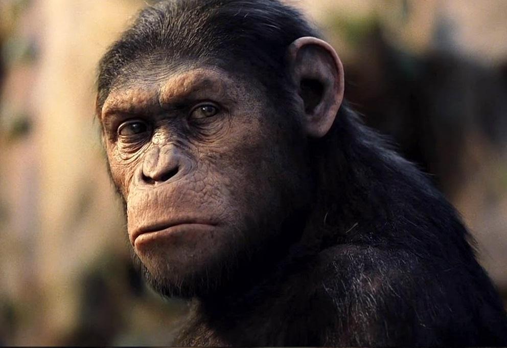JG_paradigma_experiencia_macaco (1)