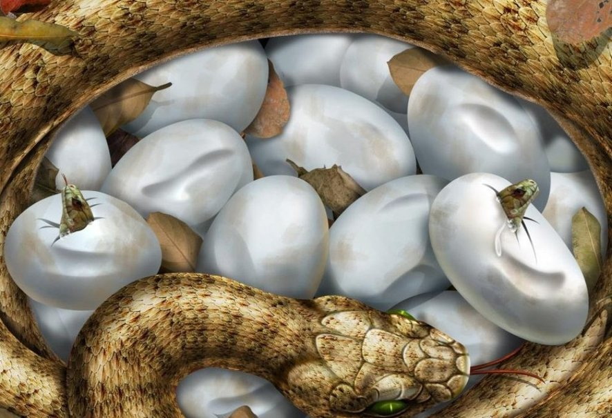 894777__snake-and-yours-eggs_p
